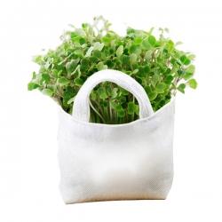 布袋小盆栽